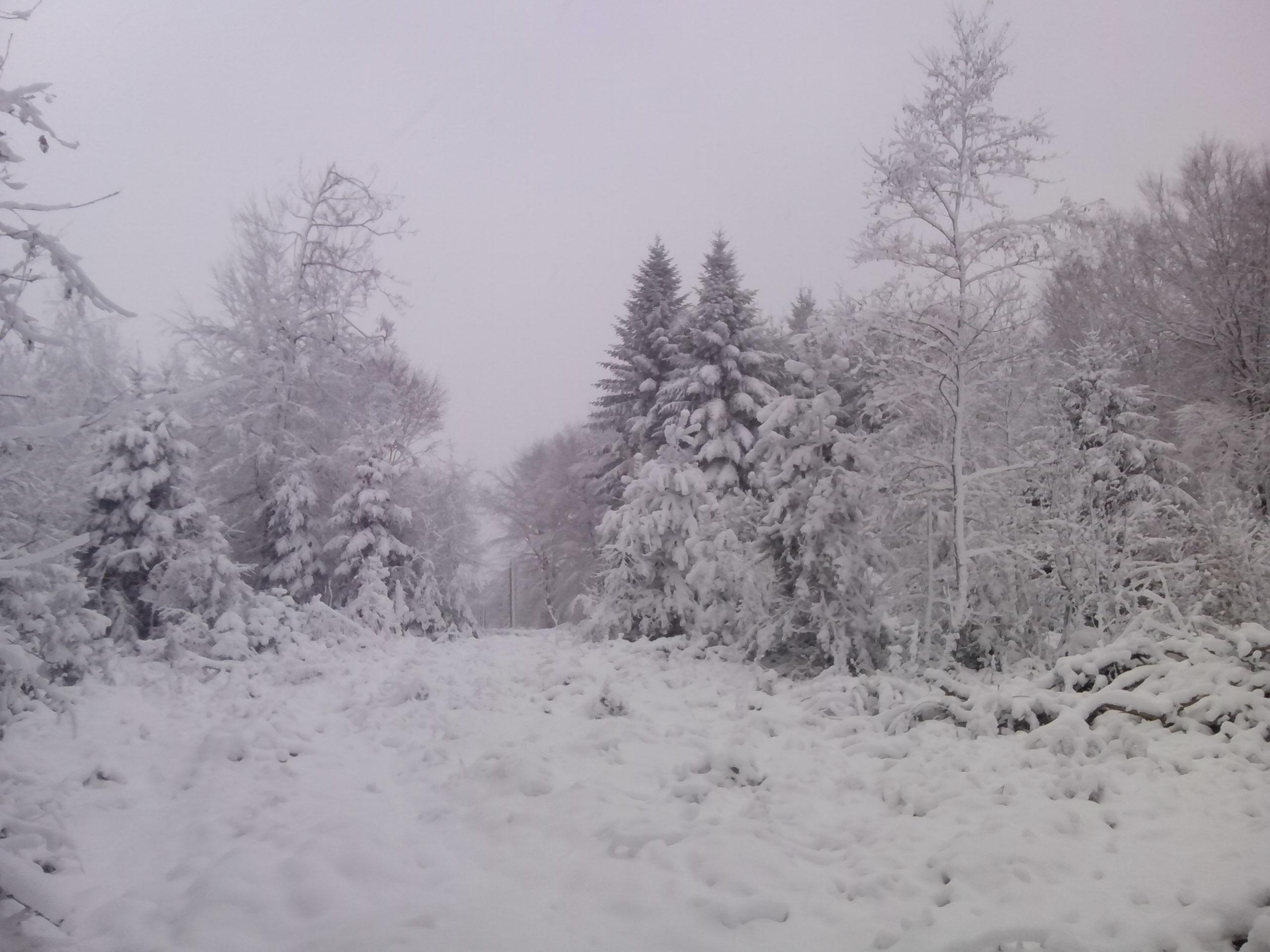 Noch immer fällt auch am 28.Dezember 2014 noch Schnee...