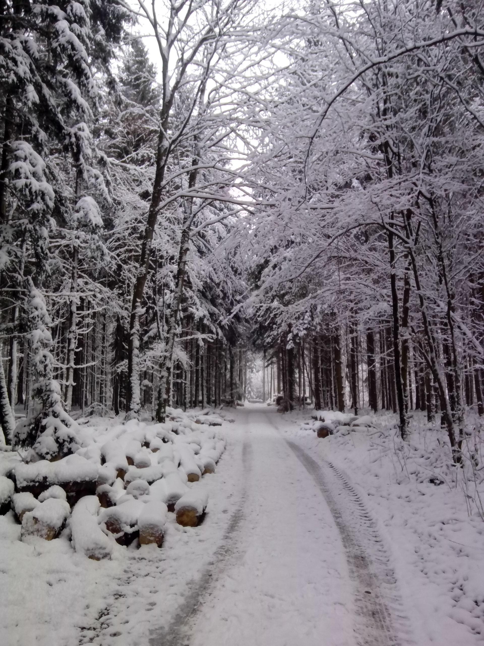 Noch am 1.1.2015 war der Wald herrlich