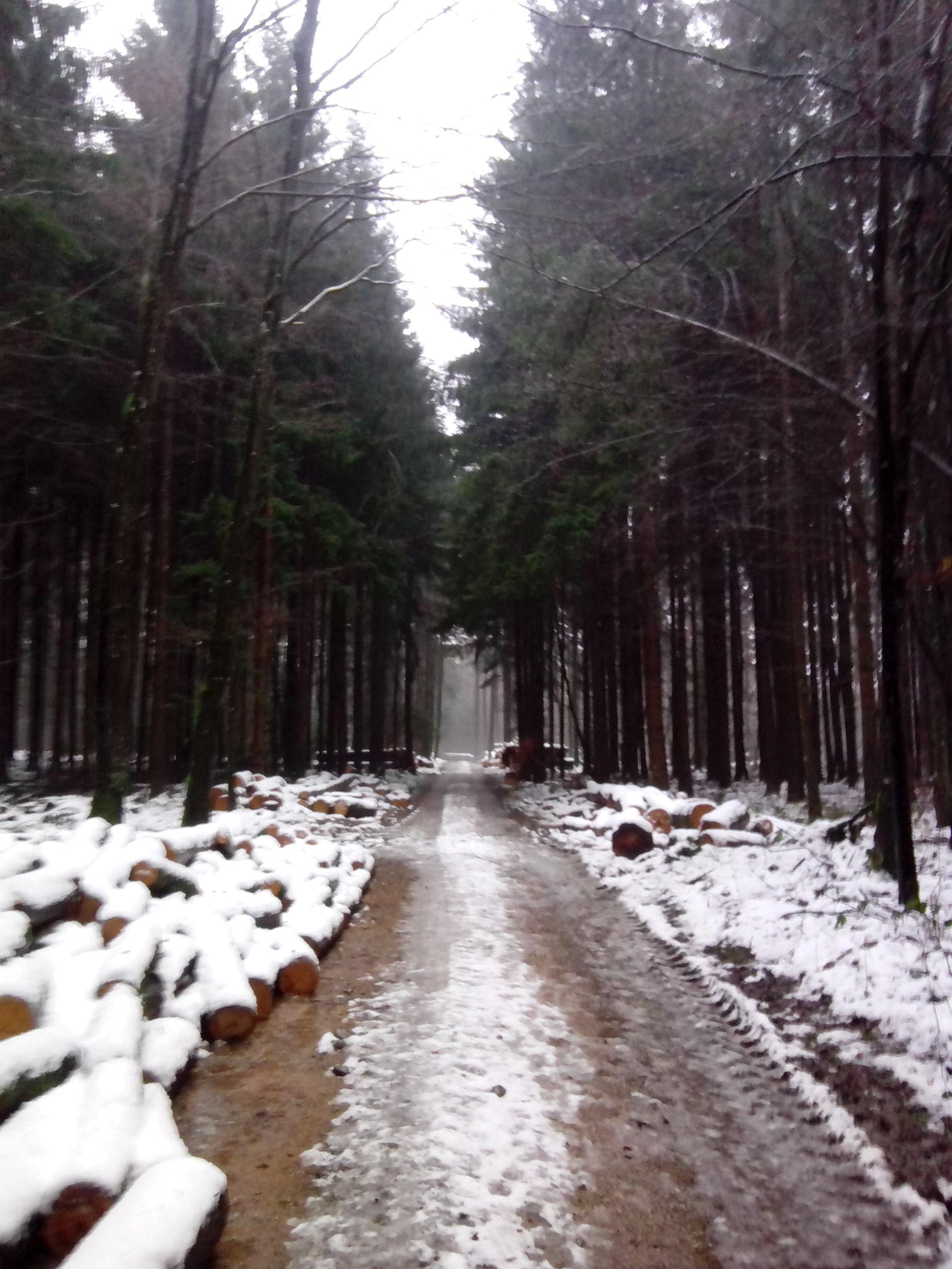 Doch am 3.1.2015 nix mehr mit herrlichem Schnee, nur noch pflotsch