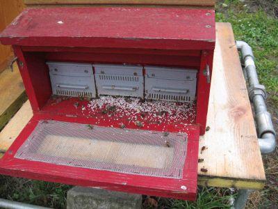 Anflugbrett vom roten Bienenvolk am 23.03.2014