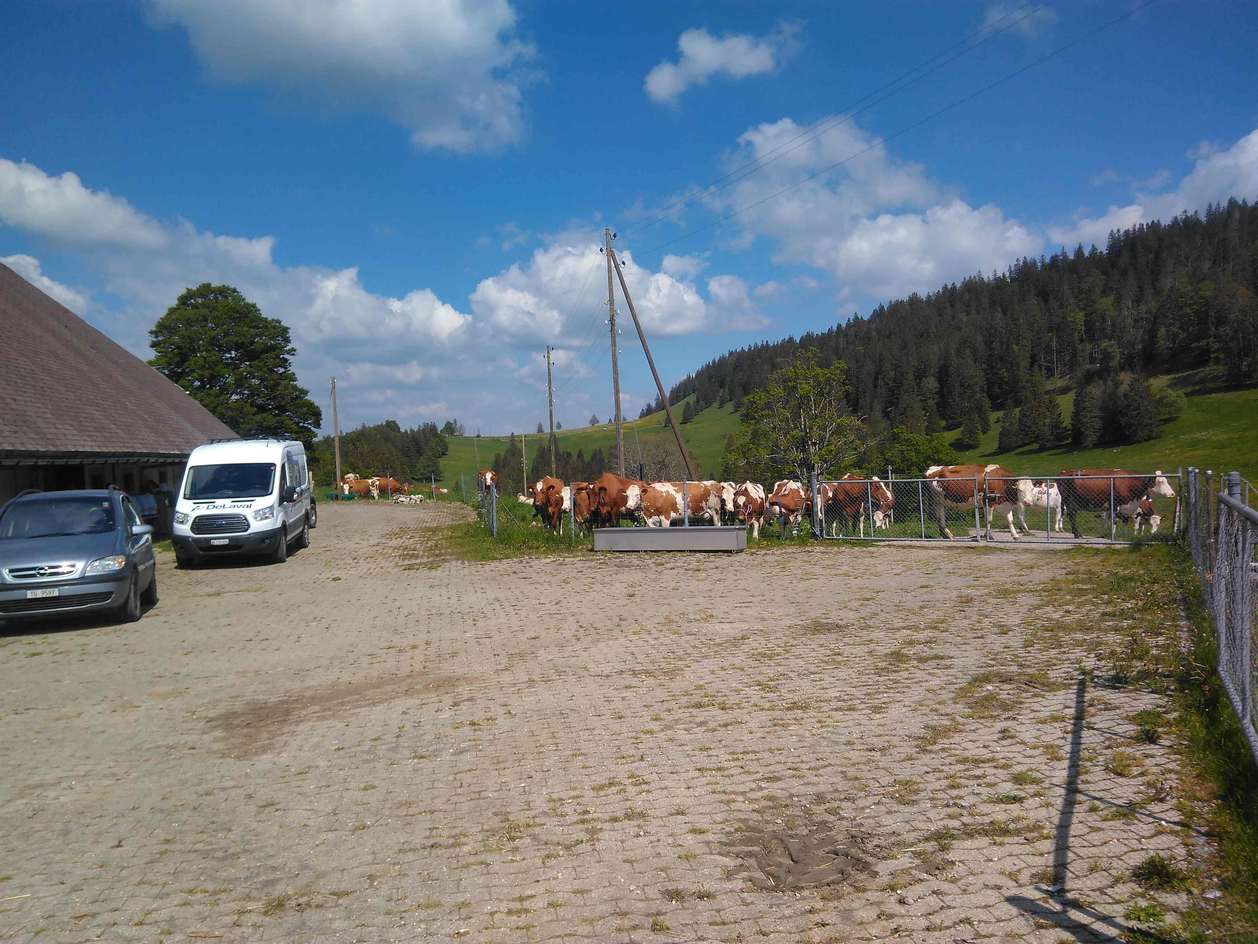 Die 38 Milchkühe warten am 19. Mai um 15:52 Uhr wann die Servicetechniker die Melkmaschine fertig installiert haben