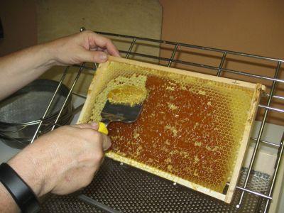 Entdeckeln der Waben vor der 2. Honigschleuderung