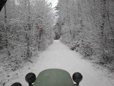 Herrlich verschneiter Wald
