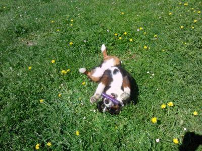 Mira geniesst die Sonne während dem spielen