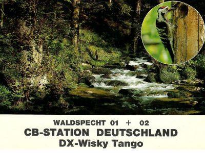 Waldspecht 01
